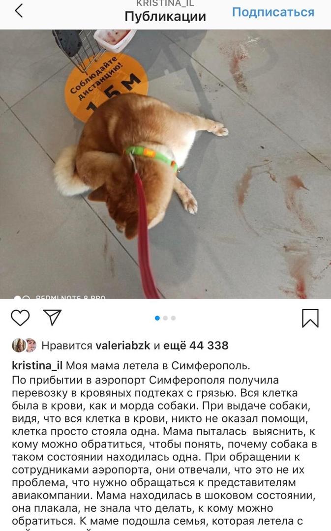 Собака пострадала при перелете