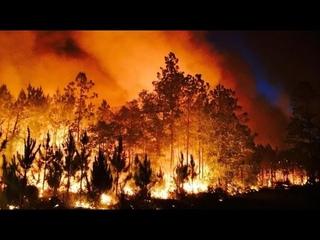 Люди покидают дома, уничтожен национальный парк: в США бушуют лесные пожары