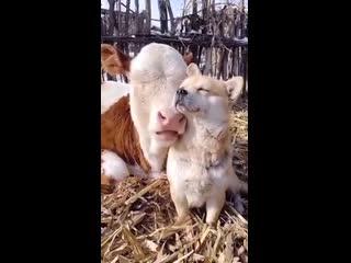 Милые животные на даче