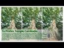 Ta Prohm Temple Cambodia Wonderful Amazing Place In The World Angkor Wat Khmer