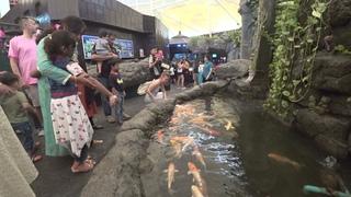 забавные рыбки в океанариуме Underwater world, Паттайя, Таиланд