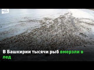 В Башкирии тысячи рыб вмерзли в лед 😨
