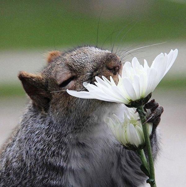 Ох уж, этот запах лета...
