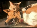 🐈 Кусает - значит любит! 🐕 Подборка приколов с котами и собаками для хорошего настроения! 😸
