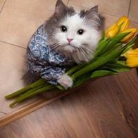 Фотография страницы Марии Поповой ВКонтакте