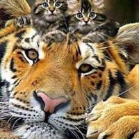 Фотография страницы Ориси Гавур ВКонтакте
