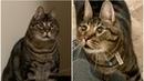 Особенный кот грустно оглядывал людей, проходящих мимо его клетки, он ещё и не знал что его ждёт