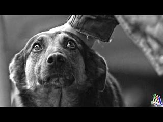 Собаки умеют ждать, и Малыш ждал