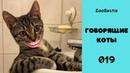Говорящие коты. Смешные животные. Приколы с животными / Зубастик подборка 019