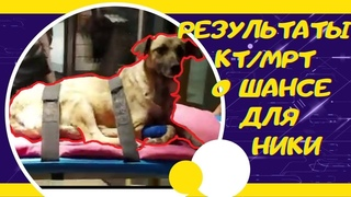 Спасение собаки Ники  Срочные новости из клиники