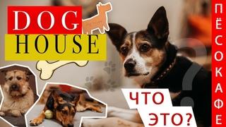 Пёсокафе в Новосибирске | DOGHOUSE| Приют для собак или что-то большее?
