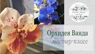 МК ОРХИДЕЯ Ванда из фоамирана своими руками / DIY Flowers handmade / Orhid Vanda Sanderiana